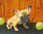 French Bulldog with Tennis Balls, Dog Portraits, 2014 _ Timothy Vermeulen